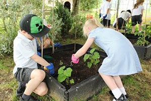 Dorset pupils gardening for countrywide gardening competition